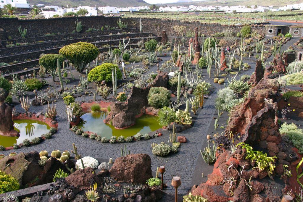 Jardín de Cactus – Taxidearrecife.com